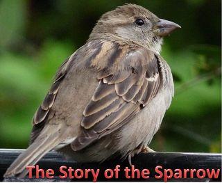Sparrow-Social Media -StratoServe
